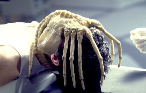 Alien face hugger pic