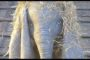 Dumbo (2019); The Trailer For Tim Burton's New All-Star Family-Friendly Classic