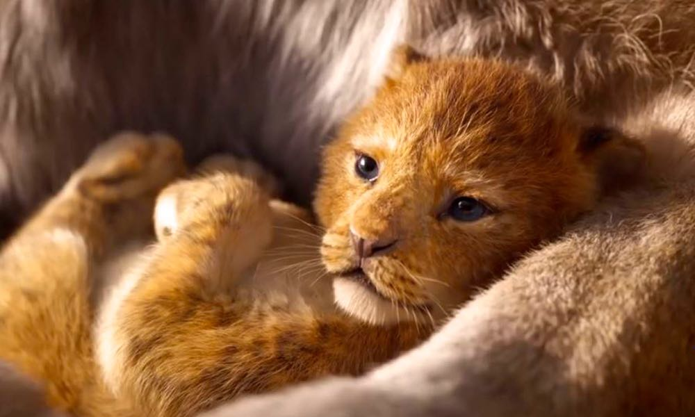 the lion king  2019   the first trailer for jon favereau u2019s