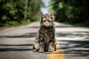 Pet Sematary -- Movie Review