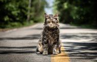 Pet Sematary -- Movie Review